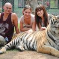 phuket-tiger-kingdom